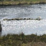 Drowses Salmon Fishery
