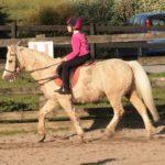Moorlands Equestrian Centre Leitrim