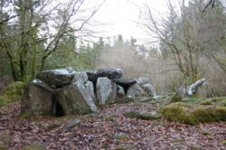 Cavan Burren park North West ireland West of Ireland
