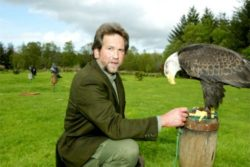 Eagles Flying Sligo Ireland Holiday
