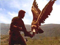 Eagles Flying Sligo Ireland
