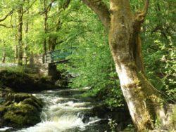 Lurganboy Forest Walks Leitrim West of Ireland