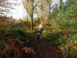 Lurganboy Forest Walks Leitrim